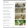Davoser Revue – Ausgabe Tiere, Inhaltsverzeichnis